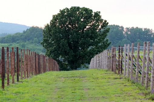 大木の存在感
